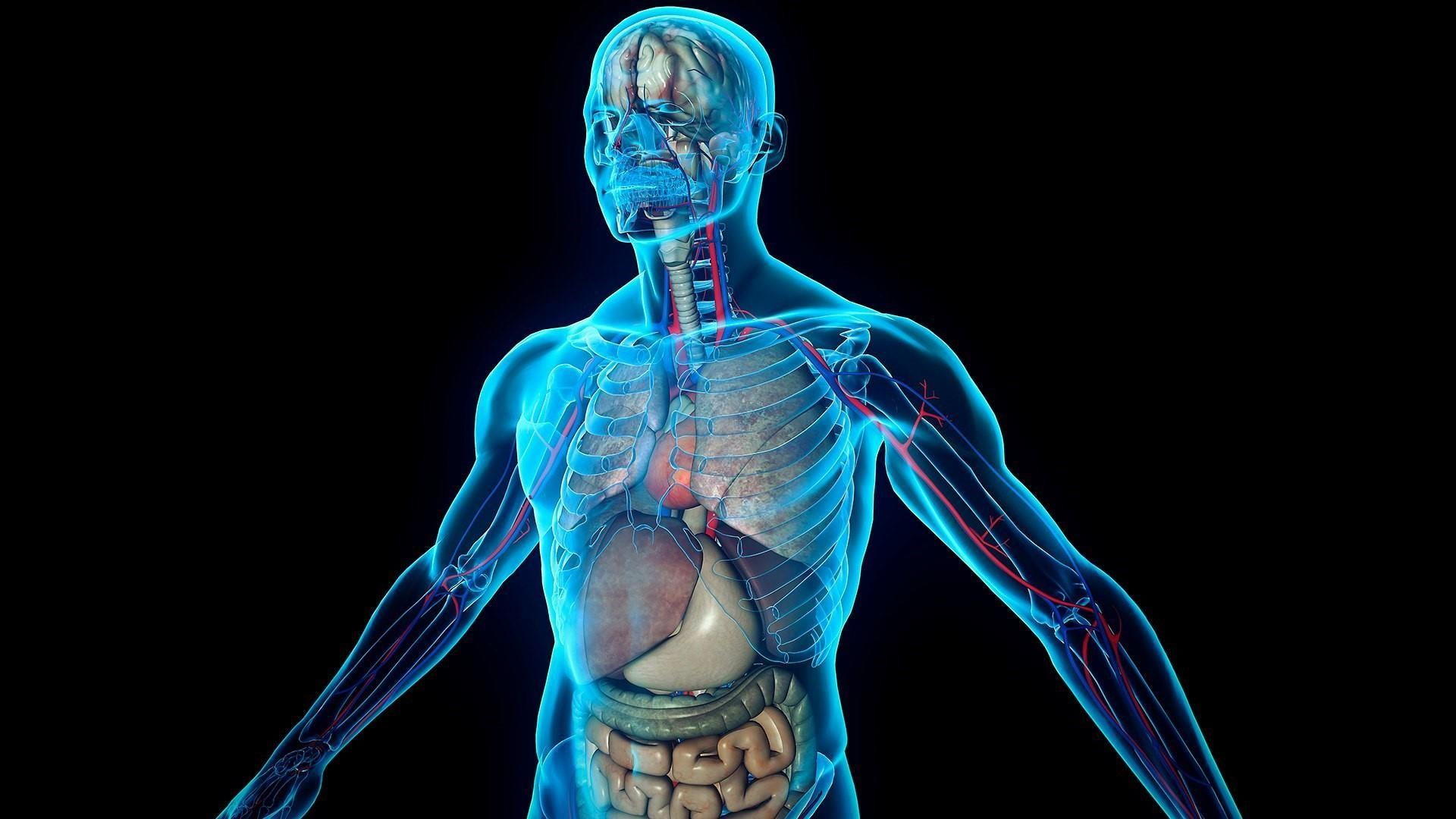 4.2.1 - Systems in the Human Body