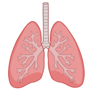 Breathing and Gas Exchange